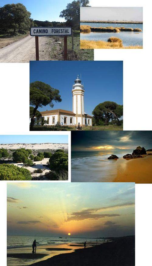 Часть пятнадцатая. опять севилья, дикие муравьи и португальская граница
