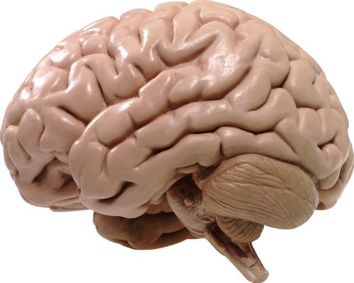 Что выматывается первым – мозг или ноги?