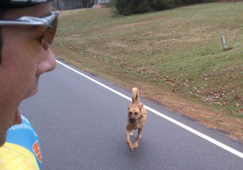Как избежать нападения собак на велосипедистов, а также укусов насекомых, ядовитых змей и других животных