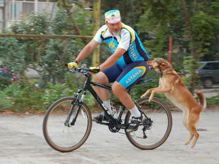 Как защититься от собак на велосипеде