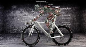 Какие мышцы задействует велосипедная езда