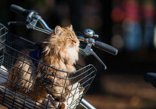 Кошка-велосипедист и велокурьеры