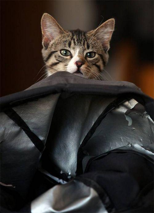Путешествия с котом? легко!