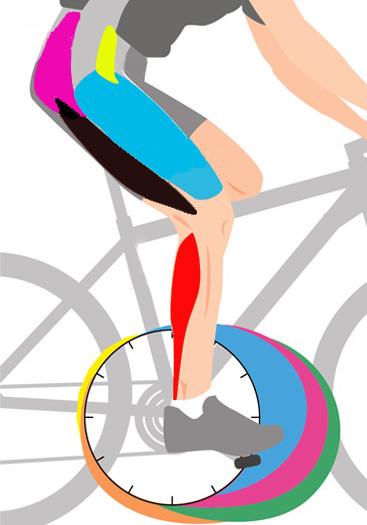 Работа мышц при езде на велосипеде