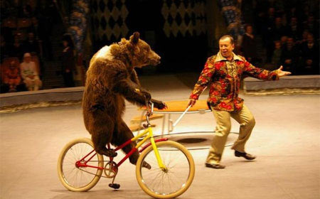 Украли велосипед у медведя