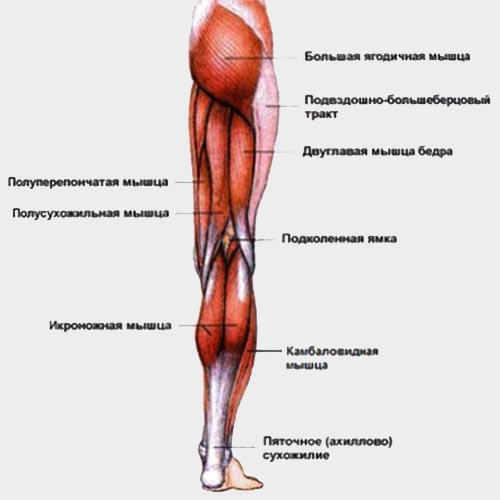 Велосипед и осанка - проработка мышц тазобедренного сустава