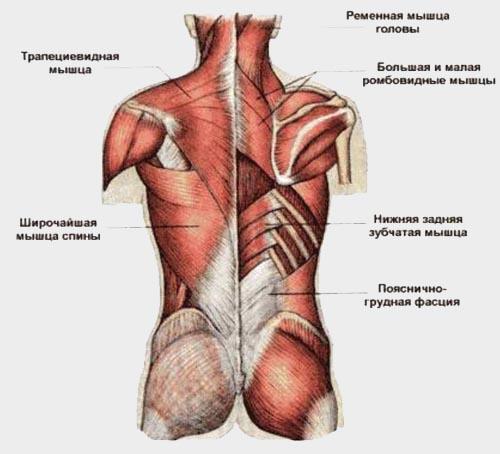 Велосипед и осанка - растяжка мышц плечевого пояса