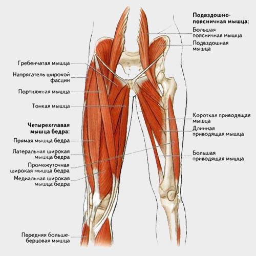 Велосипед и осанка - растяжка мышц тазобедренного сустава
