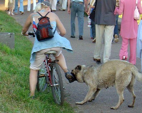 Велосипед и собаки — как себя вести и что делать