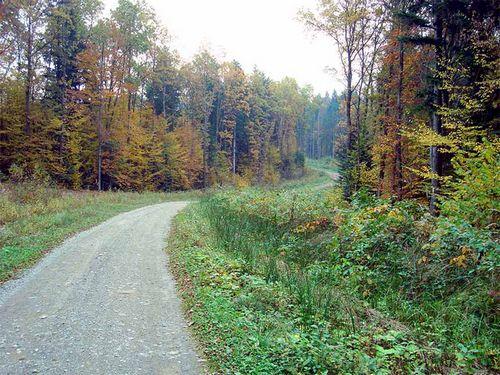 Велосипедный маршрут «тисовый заповедник»